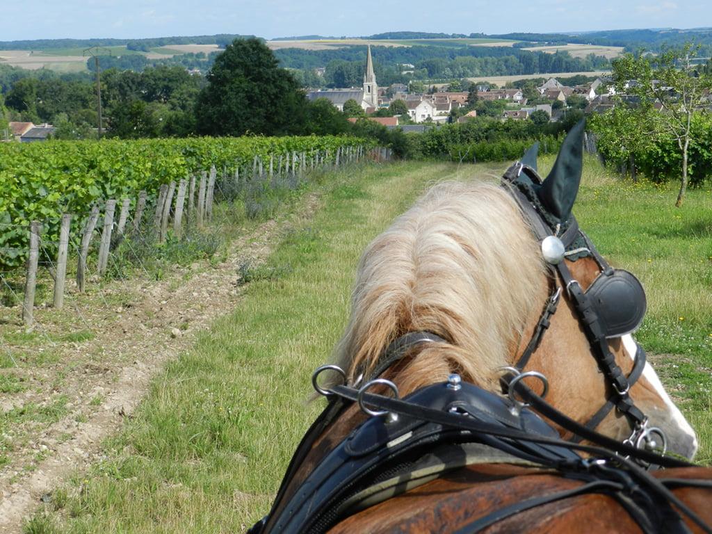 Les Vignes en calèche