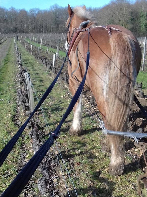 La Vigne Trotte-Putain